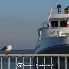 Bilder aus Cuxhaven - hier im Fährhafen / Helgolandanleger