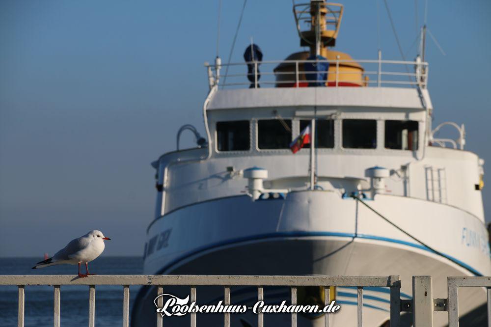 Blauer Himmel, Sonnenschein, Möwe und Helgolandschiff in Cuxhaven
