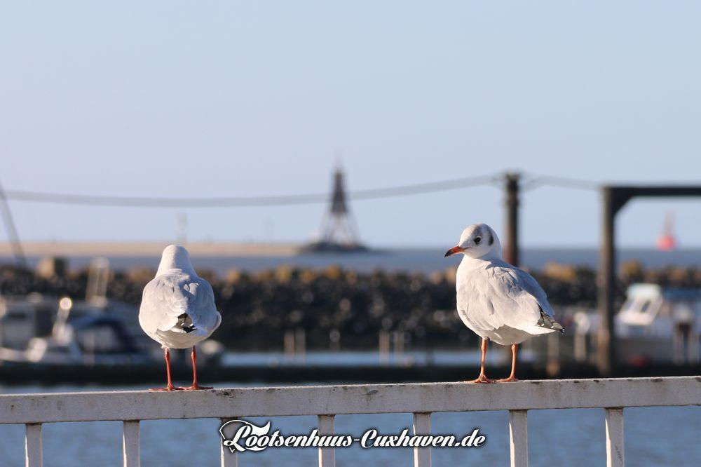 Cuxhaven Fährhafen Möwe Kugelbake