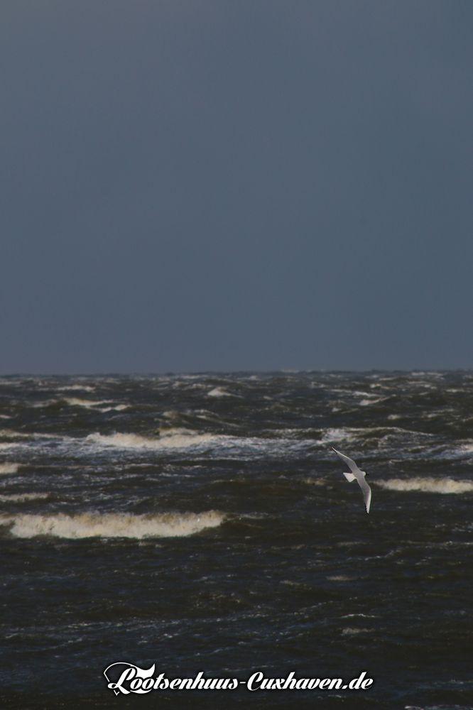 Möwe über Wellen und stürmischer See vor Cuxhaven an der Nordsee