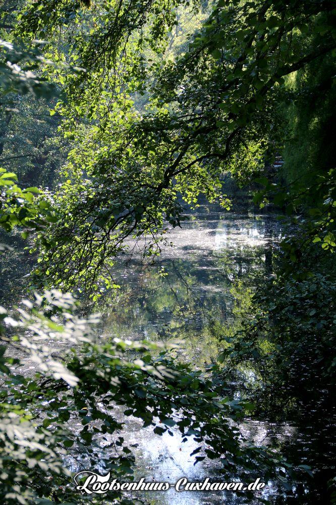 Cuxhaven Schlossgarten - Bäume, Wasser, zwielichtige Sonne zwischen den tiefhängenden Ästen